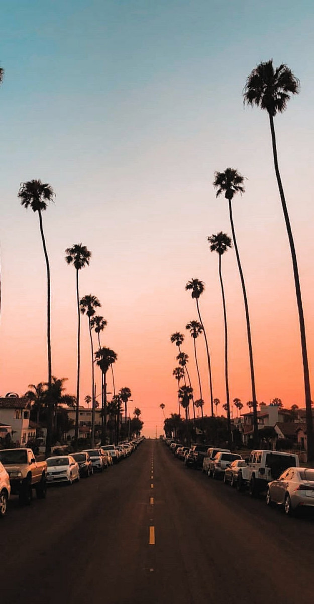 warm sunset trees cute wallpapers